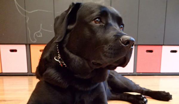 terapijski pas